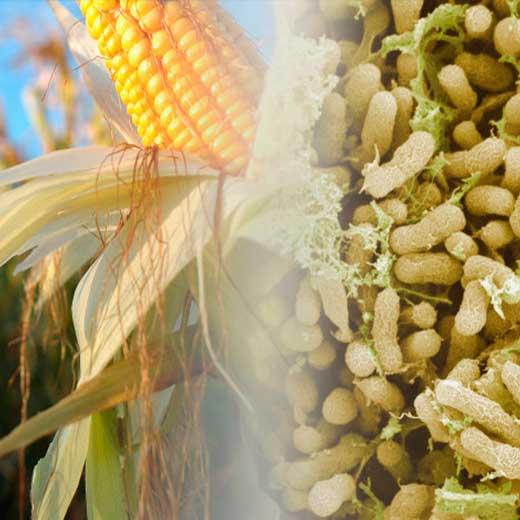The World Has a Fertilizer Problem