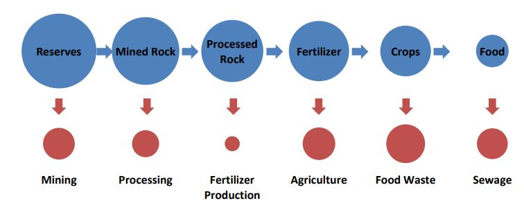 Besides, fertilizers and chemicals, the other areas where rock phosphate is applied, include: