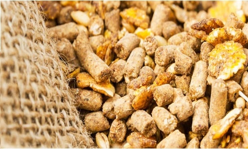 animal feed supplements production